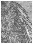 Jolanta Rejs Apocalypse in fragments (After AD 1511) No. 1