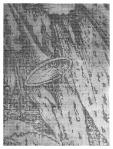 Jolanta Rejs Apocalypse in fragments (After AD 1511) No. 2